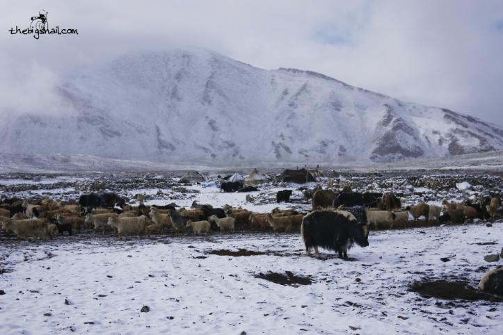 Zara - Ladakh - 07/2013