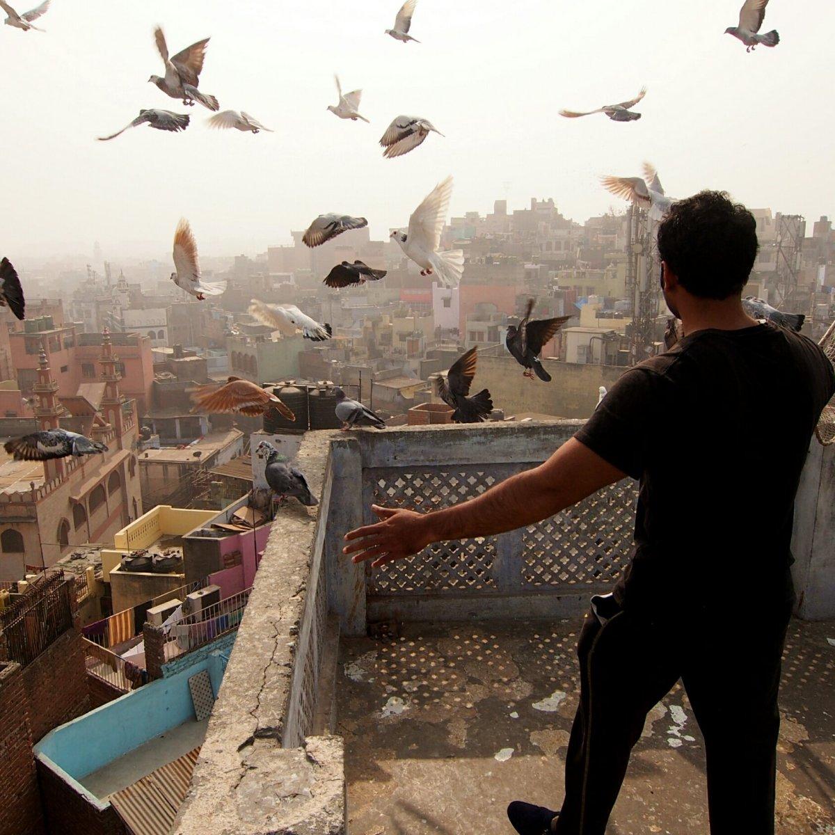 Salim faisant voler ses pigeons au-dessus des toits de Old Delhi